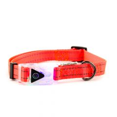 Great&Small Reflective Collar with Flashing Buckle